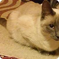 Adopt A Pet :: Cece - Fairborn, OH