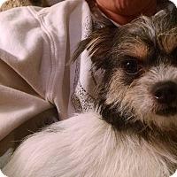 Adopt A Pet :: Cracker - Simi Valley, CA