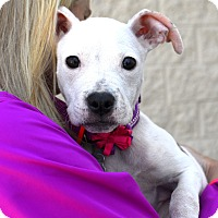 Adopt A Pet :: Mattie - Detroit, MI