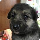 Adopt A Pet :: 4485