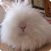 Adopt A Pet :: Sia - Foster, RI