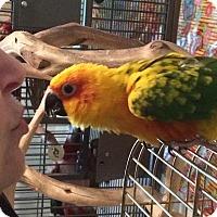 Adopt A Pet :: Louise - St. Louis, MO