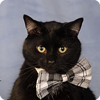 Adopt A Pet :: Mouse - mishawaka, IN