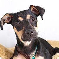 Adopt A Pet :: Jagger - Sudbury, MA