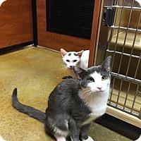 Adopt A Pet :: Chance & Coco - Phillipsburg, NJ