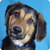Adopt A Pet :: Jensen - Minneapolis, MN