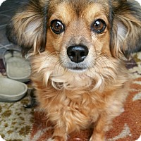 Adopt A Pet :: BAILEY - Hurricane, UT