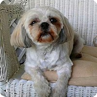 Adopt A Pet :: Emma-adoption pending - Mississauga, ON
