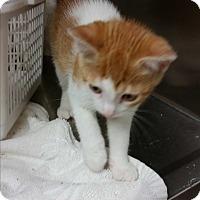 Adopt A Pet :: Yesmina - Chippewa Falls, WI