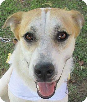 Collie/Husky Mix Dog for adoption in Aurora, Illinois - Bonnie Bell