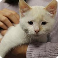 Adopt A Pet :: Deacon - Washington, DC