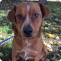 Adopt A Pet :: Cinderella - Polson, MT