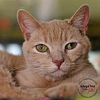 Adopt A Pet :: Swaby - Lyons, NY