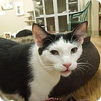 Adopt A Pet :: Berni - Medina, OH