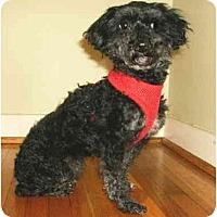 Adopt A Pet :: Marie - Mooy, AL