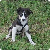 Adopt A Pet :: Olivia - Minneola, FL