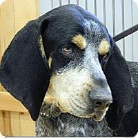 Adopt A Pet :: Jackie Blue - Sacramento area, CA