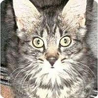 Adopt A Pet :: Shakespeare - Port Republic, MD