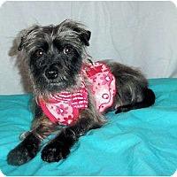 Adopt A Pet :: Veronica - Mooy, AL