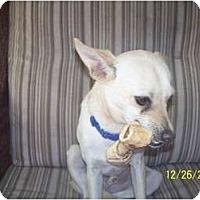 Adopt A Pet :: Riley - Andrews, TX