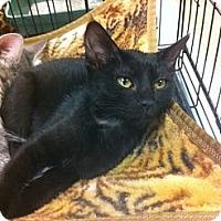 Adopt A Pet :: Wasabi - Sacramento, CA