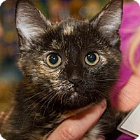 Adopt A Pet :: Autumn - Irvine, CA