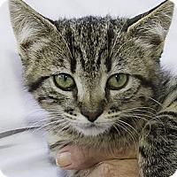 Adopt A Pet :: Tauriel - Irvine, CA