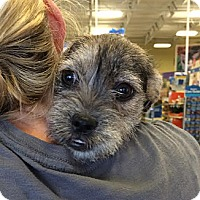 Adopt A Pet :: Stache - Phoenix, AZ