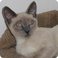 Adopt A Pet :: Halzey - North Highlands, CA