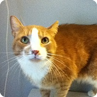 Adopt A Pet :: RUSTY - Huntington Station, NY