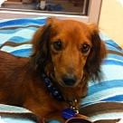 Adopt A Pet :: Max Bonita
