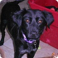 Adopt A Pet :: Minnie - Pompton lakes, NJ