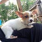 Adopt A Pet :: Tim Gunn