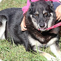 Adopt A Pet :: Jess - Greeneville, TN