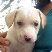 Adopt A Pet :: Stella **ADOPTION PENDING** - Fairfax, VA