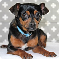 Adopt A Pet :: Chico - Starkville, MS