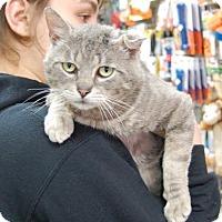 Adopt A Pet :: Vega - Brooklyn, NY