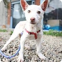 Adopt A Pet :: Brian-Judy - Seattle, WA