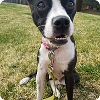 Adopt A Pet :: Inez - Fort Collins, CO
