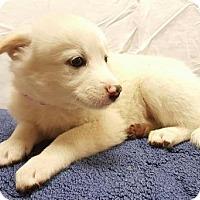 Adopt A Pet :: Apollo - Modesto, CA