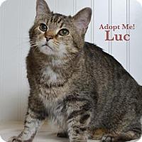Adopt A Pet :: Luc - West Des Moines, IA