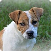 Adopt A Pet :: Eleanor Rigby - Glastonbury, CT