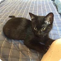 Adopt A Pet :: Von - Fort Collins, CO