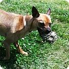 Adopt A Pet :: TUCK!!