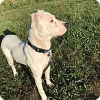 Adopt A Pet :: Kramer - Saginaw, MI