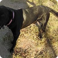 Adopt A Pet :: Joshua - Phoenix, AZ