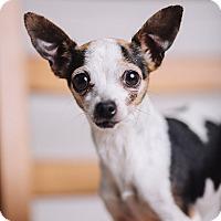 Adopt A Pet :: Minnie - Portland, OR