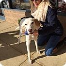 Adopt A Pet :: Kasper