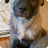Adopt A Pet :: D'Artagnan (Artie) - CARISLE, PA