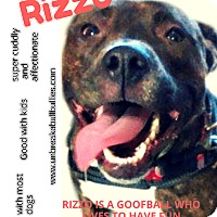 Adopt A Pet :: Rizzo - Des Moines, IA